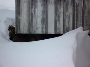Mycket snö tycker Boa